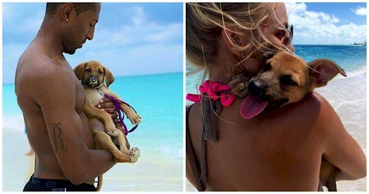 A rescue for puppies, this tropical island is a dream for every animal lover who can afford it.